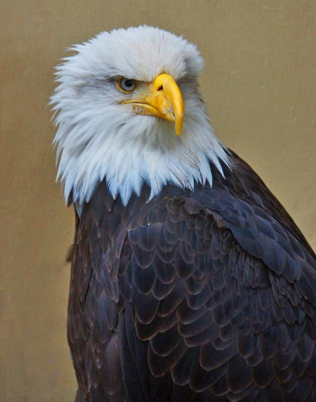 America's Freedom Symbol