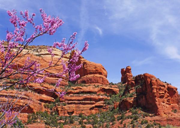 Sedona Springtime