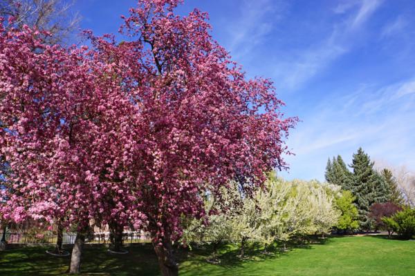 Springtime in Reno