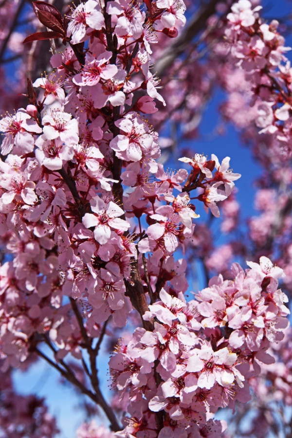 The Color of Spring