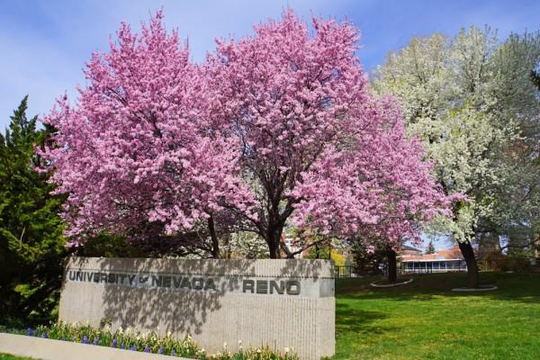Springtime at UNR