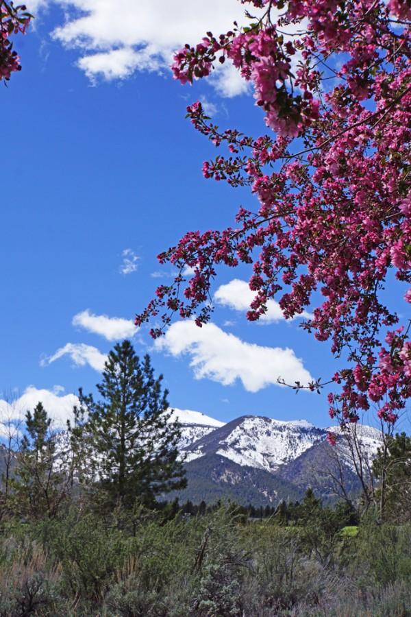 Springtime in the Sierras II