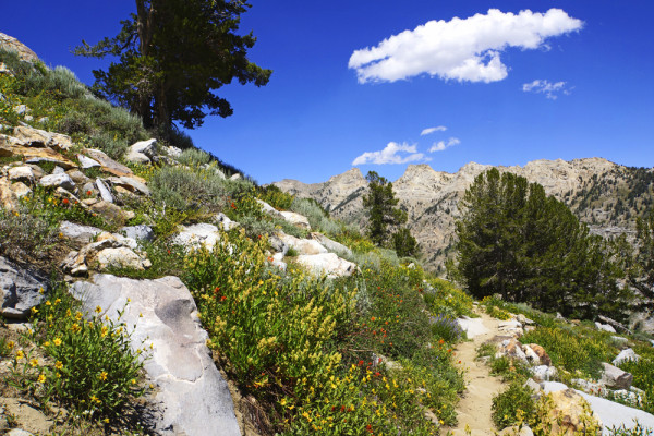Wildflower Hike in the Ruby Mountains