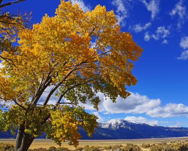 Autumn in Washoe Valley
