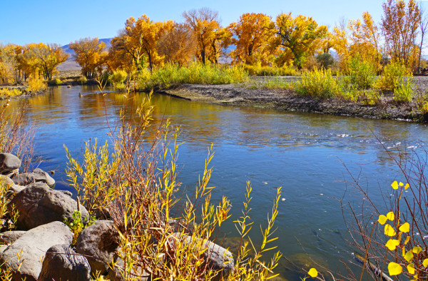 Autumn Along the Carson River