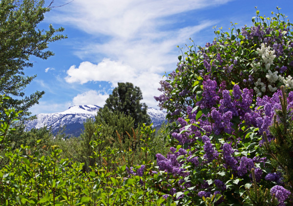 Mt Rose Springtime Vista