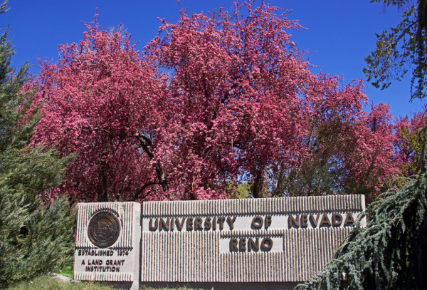 Springtime at UNR